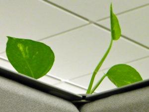 plante verte dans un cubicle
